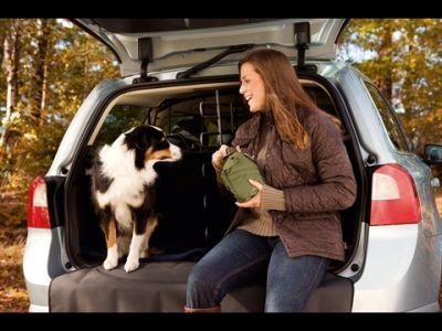 Volvo: per Animal Fair Magazine sono le vetture più amate anche dai nostri amici a 4 zampe