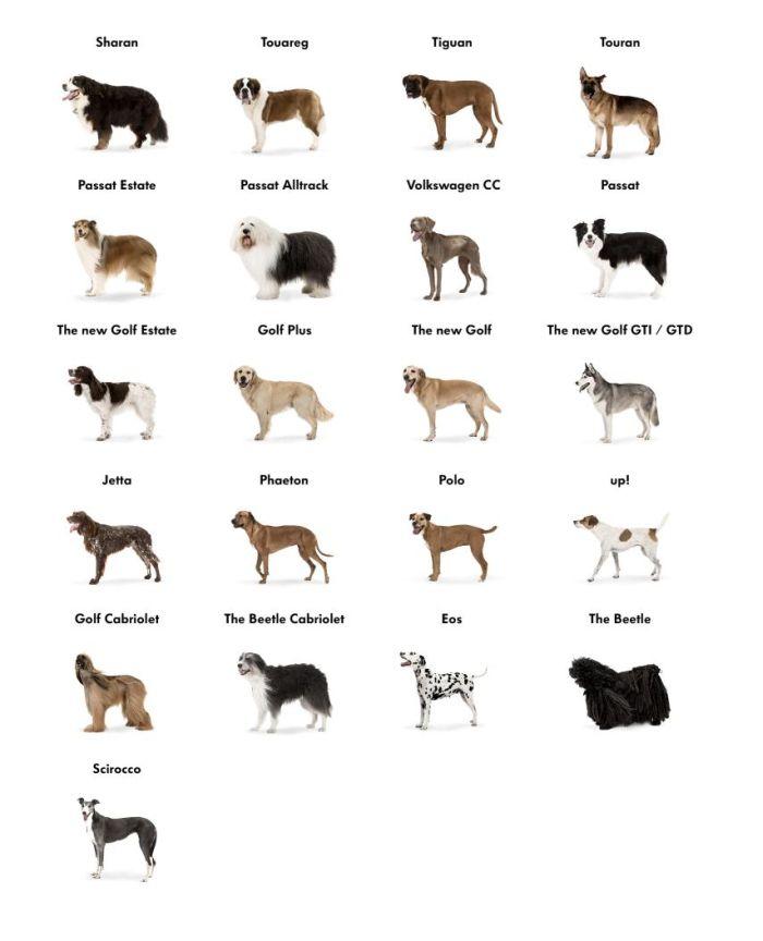Volkswagen UK: un cane per ogni modello. L'originale campagna ADV adam&eveDDB