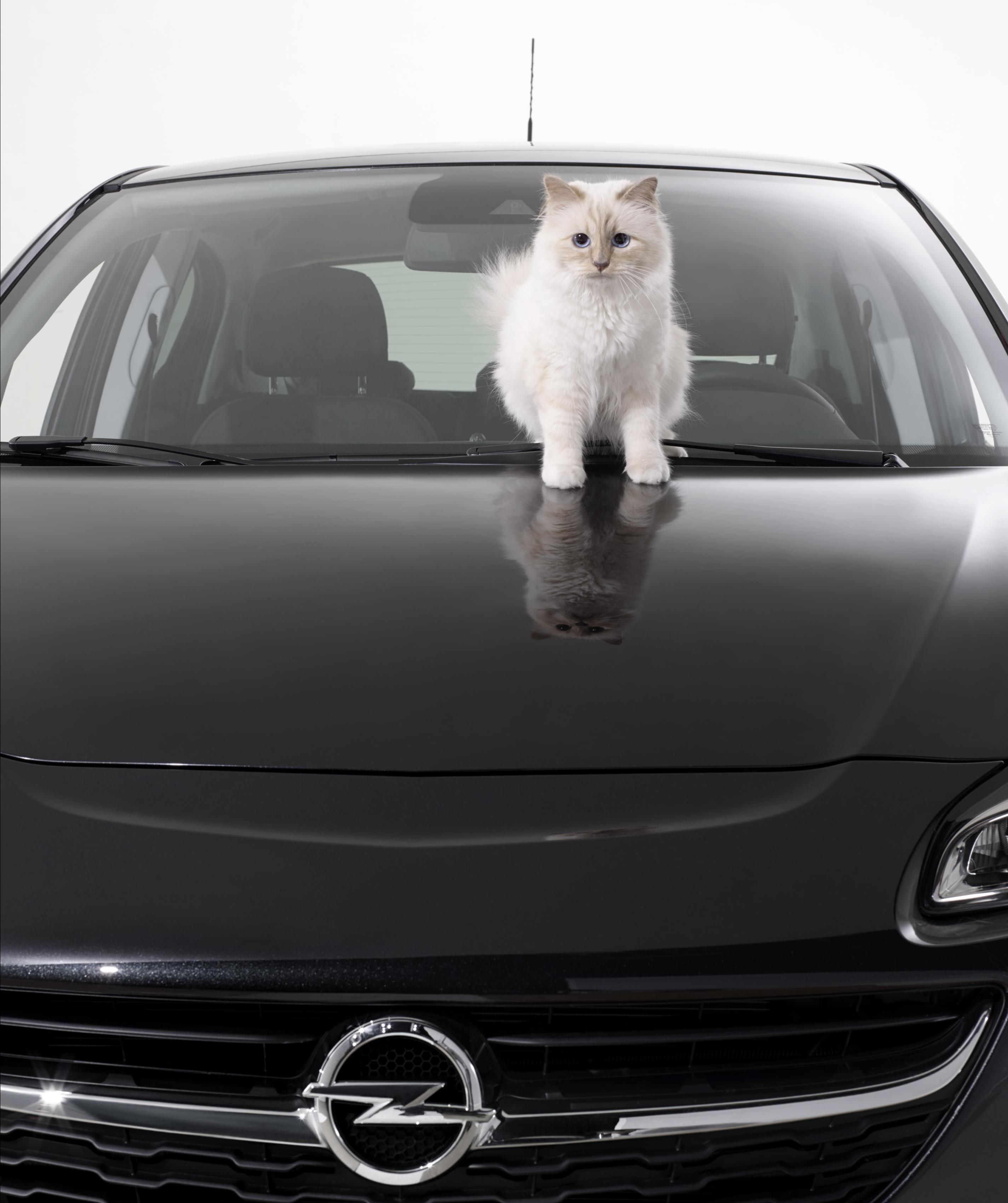 Opel Corsa e Choupette posano per Karl Lagerfeld  2