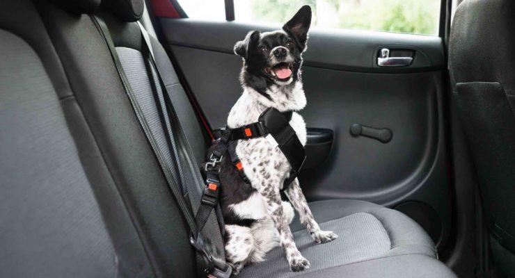 Come eliminare l'odore del cane in auto